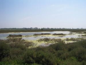 Naturschutzgebiet 037 Frania