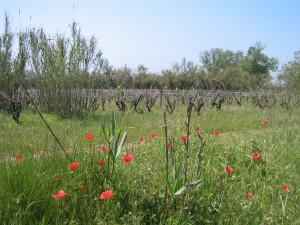 Naturschutzgebiet 043 Frania